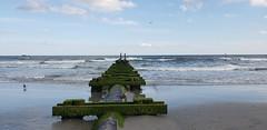 Atlantic City,  N.J. 2018 (bpephin) Tags: ac nj jersey casino boardwalk ocean bird seagull water