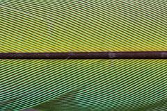 Macro Mondays : Line Symmetry (erichudson78) Tags: macromondays abstractmacro canonef100mmf28lmacroisusm macro canoneos6d linesymmetry plume feather lines lignes macromademoiselle 7dwf monochrome