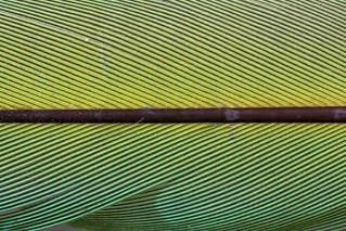 Macro Mondays : Line Symmetry