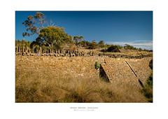 Spikey Bridge - Swansea, Tasmania (Dominic Scott Photography) Tags: dominicscott australia tasmania swansea spikey spiky bridge sony ilce7rm2 a7rm2 a7rmii gmaster sel1635gm manfrotto leefilters