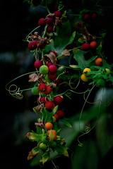 Romantic nature ... (Julie Greg) Tags: nature flower colours texture canon800d canon leafs park