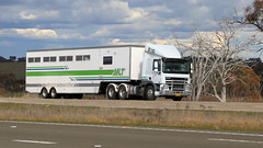 EQUINE Transport (1/2) (Jungle Jack Movements (ferroequinologist)) Tags: equine horse thoroughbred pacer galloper race box hino transport signature mlt wagga lachlan valley way hume highway yass nsw new south wales australia hp horsepower big rig haul haulage freight cabover trucker drive carry delivery bulk lorry hgv wagon road nose semi trailer deliver cargo interstate articulated vehicle load freighter ship move roll motor engine power teamster truck tractor prime mover diesel injected driver cab cabin loud rumble beast wheel exhaust grunt