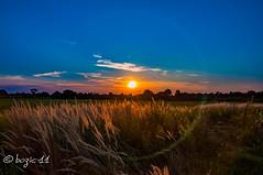Sunset pano (br_od70(Robert@B)) Tags: nikond90 nikonflickraward nature landscape sunset bluesky orangesky