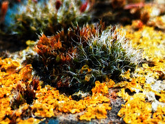 I Like Lichen (Steve Taylor (Photography)) Tags: lichen digitalart uk gb england greatbritain unitedkingdom margate plant texture wall bokeh closeup macro