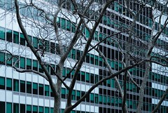 NYC Arch & Trees #20 (Ximo Michavila) Tags: nyc tree winter newyork city usa abstract windows building urban ximomichavila graphic architecture archdaily archidose archiref glass lines minimal contrast