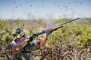 Argentina Luxury Dove Hunting 45