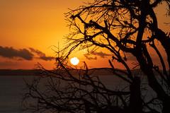 Por do sol no Mirante dos Aflitos (ladgon) Tags: bahia igrejadosaflitos salvador mirantedosaflitos pôrdosol goldenhour sunset