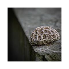 Stille II (Werner D.) Tags: friedhof wernerd stillleben stein grabstein nature