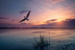 die Möwe am Morgen (Frank Dohle) Tags: frankdohle artwork composing landscape nature wildlife animals sony sonya9 ilovemywork aperture time exposure photoshop sonyimages sonyphotography sonyphotogallery sonymirrorless sunrise seagull steinhudermeer