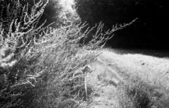 zorki3mapx100120818025 (salparadise666) Tags: zorki 3m jupiter 8 50mm agfa apx100 orange filter caffenol cl 35min nils volkmer rangefinder analogue vintage film camera hannover region bw black white monochrome landscape