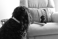 Benni and BB (Bennilover) Tags: figurine resin bb benni labradoodles posing photoop sharing jealous dogs home explore