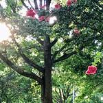 🌸 A Girl For All Seasons 🌸 thumbnail