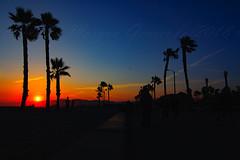 30 (morgan@morgangenser.com) Tags: sunset red orangeyellow blue pretty cloud silhouette sun evening dusk palmtrees bikepath sand beach santamonica pacificpalisades beautiful black dark cement amazing gorgeous inawe ca photobymorgangenser