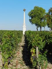 Une étoile dans les vignes (Daniel Biays) Tags: vigne vine architecture pauillac gironde