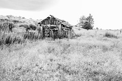 Tulelake, California (paccode) Tags: solemn d850 landscape bushes brush serious quiet california abandoned barn monochrome lonely tree shack scary forgotten farm blackwhite creepy tulelake unitedstates us