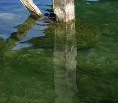 Reuss (Priska B.) Tags: kapellbrücke holzbrücke brücke reuss luzern fluss morgen grün licht holz grund flussgrund spiegelung schweiz switzerland swiss svizzera