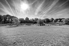 Overbroek (enneafive) Tags: overbroek sinttruiden meadow bucolic pastoral fujifilm xt2 monochrome contrast landscape sun