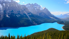 Too Blue - Peyto Lake (Sid's Corner) Tags: green canada canadianrockies rockies nature natureaddict nationalgeographic nationalgeographicworldwide ngc northamerica blue adventure schoksi schoksiphotography scenery nikond800 americas d800 flickraward flickrcentral flickrgallery flickrawardgallery picoftheday landscape landscapes lake lakes paradise travel tripofalifetime viewpoint nationalparks nationalpark banff banffnationalpark canadianparks reflection reflectionpool naturephotography peyto peytolake glaciallake mountain mountains valley