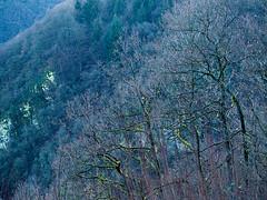 20171228-147 (sulamith.sallmann) Tags: landschaft pflanzen baum botanik bäume deutschland germany mettlach natur pflanze plants saarland tree wald deu sulamithsallmann