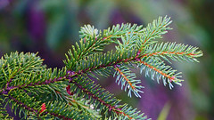 TreeHartleyNatureCenter0805180001.jpg (TonyM1956) Tags: elements sonyalphadslr macrounlimited tonymitchell nature duluth minnesota sonyphotographing