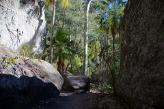 Track into the Art Gallery (Geoff Main) Tags: australia canon6d canonef24105mmf4lisusm carnarvongorgenationalpark gorge landscape nationalpark queensland
