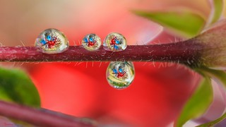Droplets - 5718