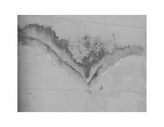 span (szélléva) Tags: bnw blackwhite monochrome abstract wall writing bird