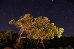 IMG_4413 (İrem Türkkan) Tags: nightsky night astrophotography galaxy sky skyporn skylove nature naturelove naturephotography landscape landscapephotography milkyway