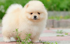 In Home Puppy Training (muttswithmanners995) Tags: inhomepuppytraining dog behaviour specialist home training