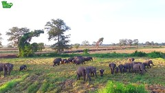 Drone footage captured how amazing elephants are (THE WILD ELEPHANT) Tags: huge elephant rescue video youtube quite baby funny kids videos the wild wildlife news tv