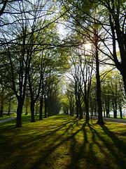 Netherlands-201804-81-TreesOfShadows (Tony J Gilbert) Tags: holland scheveningen denhaag nikon landscapes netherlands thehague hague