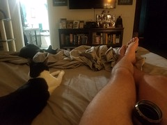 20180807_063244 (sobca) Tags: cat kottur kitte eesa miu kat pussi kato chat katze popoki gatto chatool billi felis cattus gato katt meo кошка बिल्ली 猫 γάτα vighro ᏪᏌחתול