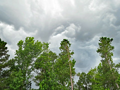 Clouds Above The Trees. (dccradio) Tags: lumberton nc northcarolina robesoncounty outdoor outdoors outside nature natural cloud clouds overcast storm stormy stormclouds expectingrain greysky greyclouds graysky grayclouds summer summerstorm thunderstorm sky landscape canon powershot elph 520hs tree trees leaf leaves foliage treebranch treebranches treelimb treelimbs branch branches backyard wooded woods forest