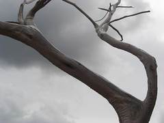 arbol seco (jb.colbert) Tags: formentera