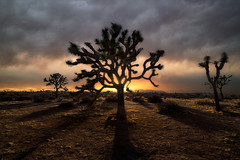 Sauron (Darkness of Light) Tags: joshua tree np nationalpark palmsprings california southern sunset sunrise shadow glow puffycloudssunsetburn