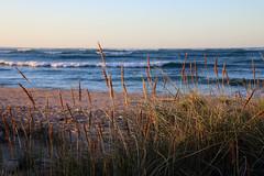 IMG_2227 (Paul Threlfall) Tags: northwestcape wa westernaustralia grasses coast