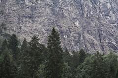 Reintal rocks and tress (Hagenz) Tags: de garmischpartenkirchen alpen bayern wandern wettersteingebirge zugspitze deutschland hiking alps bavaria germany landscape landschaft natur nature nikon d7100 mountains berge rocks forest wald felsen reintal