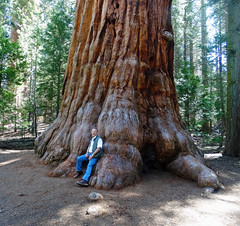 Lean on Me, Sequoia NP 5-18 (inkknife_2000 (9 million views)) Tags: sequoianationalpark giantsequoia bigtrees forest skyandclouds youngtrees dgrahamphoto california americasnationalparks redbark bigtreetrail roundmeadow amazingtrees beauty america