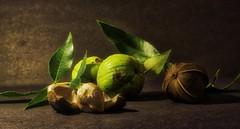Hickory Nut Stages IMG_6899 (ForestPath) Tags: hickory nuts peels shell leaves summer harvest yummy home backyard field shagbarkhickory ohio usa cincinnati