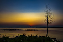 Tree (Notkalvin) Tags: tree sunset dusk caseville michigan night longexposure lake lakemichigan bay water reflection silhouette gradient bluehour
