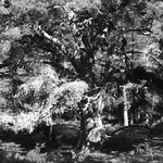 Black Woods of Rannoch 4 thumbnail