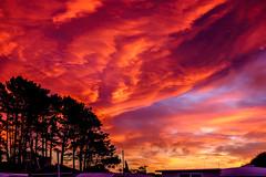 ºº Waitarere winTer sKy ºº (m+m+t) Tags: dscf57641 mmt meredithbibersteindesign newzealand northisland waitarere beach hydrabadmotorcamp camping winter sunset evening sky clouds silhouette fujixt1 fujixseries fujimirrorless 35mm trees