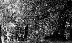 Mirrored sculptures at Wynch Bridge . (wayman2011) Tags: colinhart fujifilm35mmf2lightroom5 fujifilmxt10 wayman2011 bwlandscapes mono rural trees art sculptures pennines dales teesdale bowlees countydurham uk