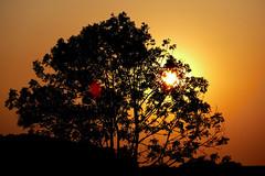 Sonnenuntergang im Wangerland (dervonderwaterkant) Tags: schillig friesland wangerland sonne sunset licht schatten highkey lowkey baum tree nordsee ostfriesland