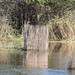 Native Fish Trap, Upper Zambezi River