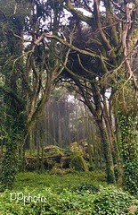 😊Good Morning 😊😘 😊 If you hold the water you drink with gratitude and reverence, Health and equanimity will be a consequence.🌳🌲🌸 😊😊😘have a lovely day :b (paulacjcpalma) Tags: mountain sintra tree florest floresta