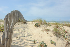 DSC_9457 (nicolas.blanchard83) Tags: landes oyat nature mer océan ombres