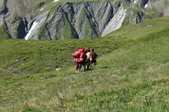 bien chargé (bulbocode909) Tags: valais suisse valferret montagnes nature vert rouge mules alpages