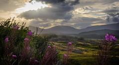 Goodmorning Scotland