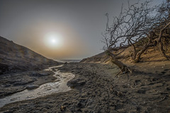 View with river and tree 1 (Andrea Gambadoro) Tags: blue tree trees burnt water sea river sand beach photography photogrsapher nature seascape view sun sunset hdr high dynamic range fuerteventura canaries island canary long shadow ocean sky summer dry